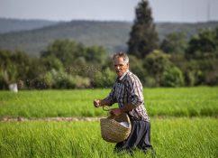 گلایه یک کشاورز از اجرا نشدن مصوبه بخشودگی جرایم کمتر از ۱۰۰ میلیون تومان + سند