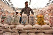 دستور جدید حجتی برای بازار برنج/ خرید حمایتی برنج ایرانی