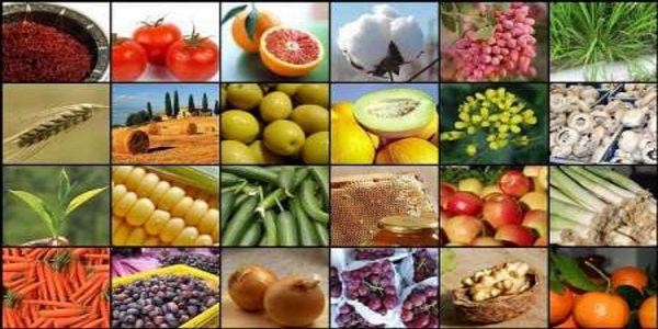 رشد ۲۰ درصدی صادرات صنایع غذایی کشور